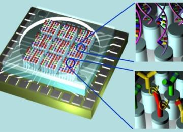 Graphene biosensor has new detection method for DNA mutations