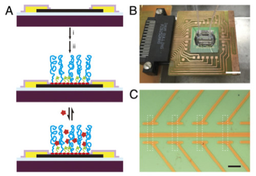Active biosensor surface and sensor chip