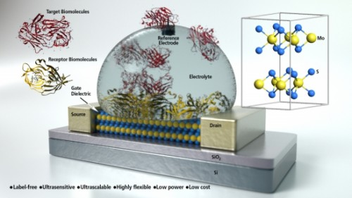 Graphene transistor builds multi-use biosensor